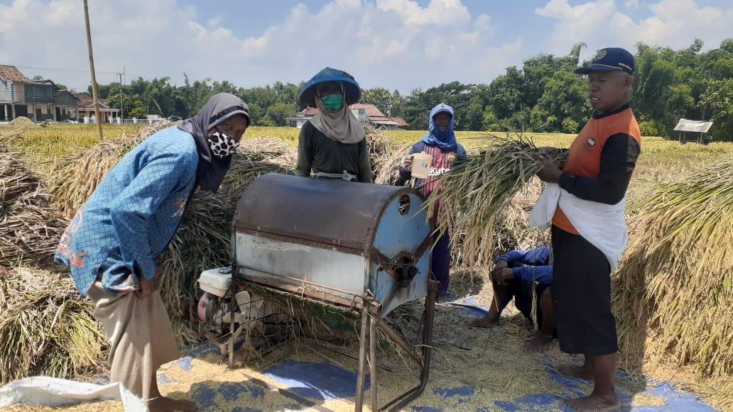 Photo of Banyak Petani Ponorogo Bertanya Tanya Penyebab Turunnya Produktivitas Padinya