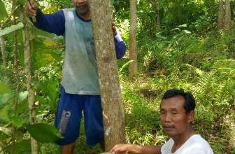 Photo of Di Masa Pendemi Covid-19 Harga Getah Karet Ponorogo Meroket
